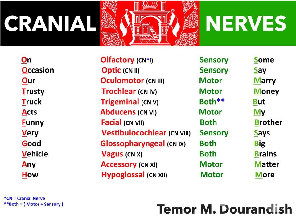 How to Use a Cranial Nerves Mnemonic to Memorize the ...