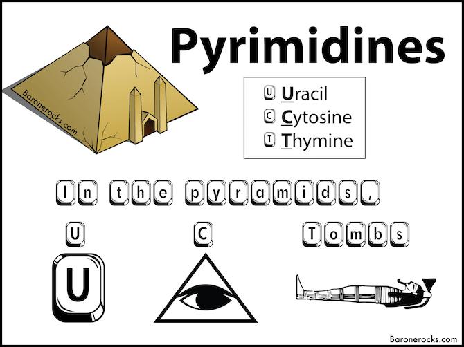 pyrimidine mnemonic